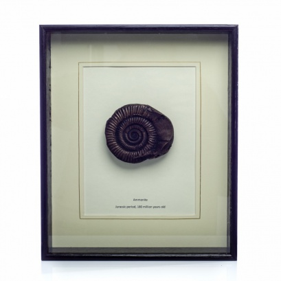 Bronze Fossil of an Ammonite