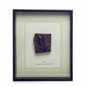 Bronze Fossil of a Trilobite
