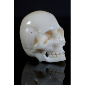 Miniature Bone Skull